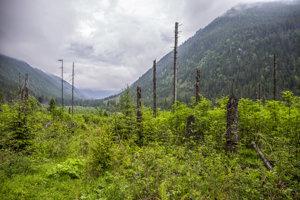Tichá a Kôprová dolina boli kedysi luxusnými poľovníckymi revírmi. Dnes je to aj vďaka úsiliu ochranárov oblasť, kde sa nepoľuje ani neťaží drevo.