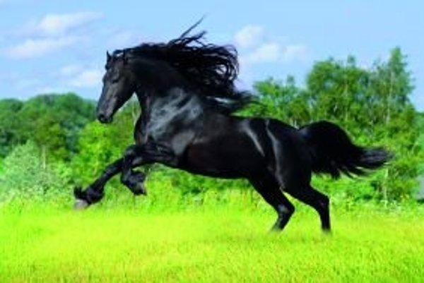 Každý kôň je osobnosť, sú medzi nimi flegmatici, cholerici, ale aj psychotici.