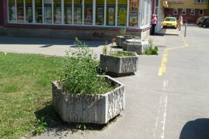 Kvetináče plné buriny pri Strojári si už žijú svoj život.