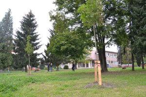 Výsadba nových stromčekov bude ešte pokračovať.