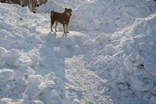 Chladné počasie prekvapilo aj v Rumunsku.