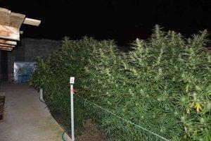 Muž pestoval drogy v záhrade.