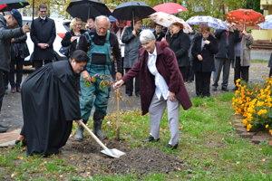 Sadenie stromov reformácie. Jednu sakuru vysadila Mária Juhásová, evanjelická farárka.