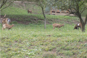 Chovajú ich na súkromnom pozemku. FOTO: OCÚ ŠVOŠOV
