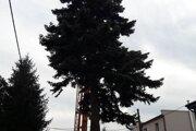 Vianočný stromček prilieta.