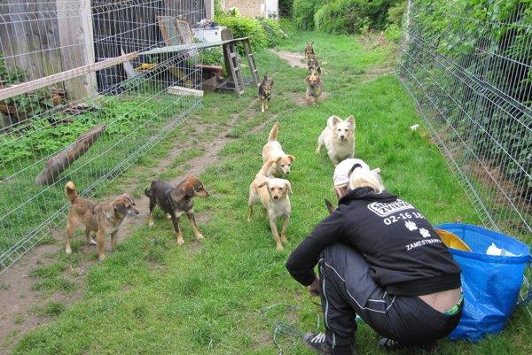 Odchyt psov v Tužine trval šesť hodín.