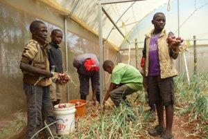 Chlapci v Bosco Boys Kuwinda počas pestovateľských prác.