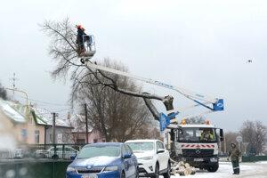 Pilčíci strom upravili.