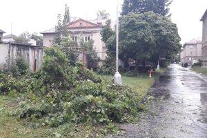 Stromy v Šturke vyrúbali lebo treba viac parkovísk.