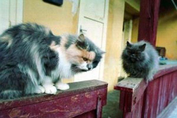 Mačky sú príjemní domáci spoločníci, s túlavými mačkami však môže byť v mestách problém
