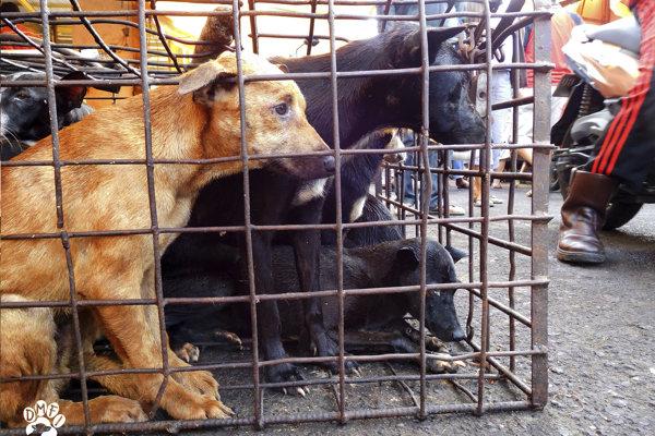 Psi sú na trhoch držaní v tesných klietkach.
