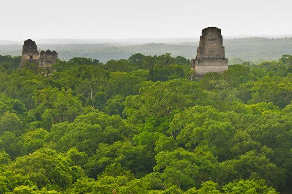 Chrámy mayského mesta Tikal vytŕčajú z guatemalskej džungle.