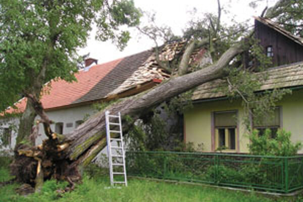 Stará lipa spadla na dva domy.