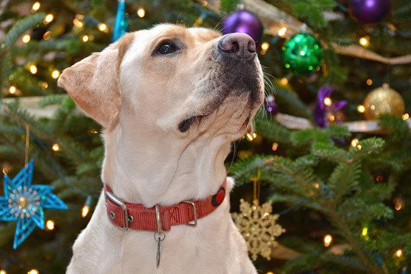 Moravce uľavili dôchodcom a zdravotne postihnutým. Za psa po novom nemusia platiť daň.