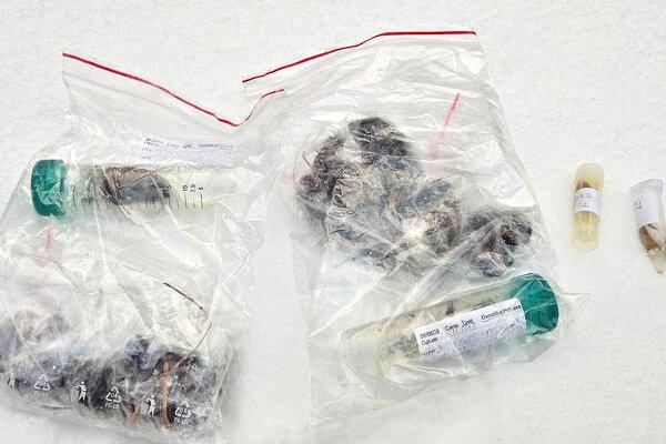 Genetické úlovky vlkov, ktoré sa dajú zabezpečiť bez ich  strieľania.