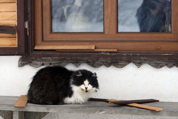 Na uliciach stále objavujú nové mačky.