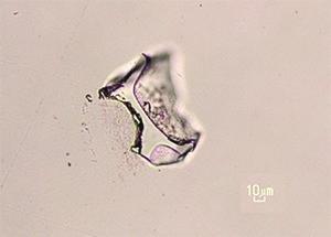 Mikroskopický úlomok vulkanického skla.