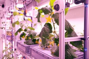 Nemeckým vedcom sa v Antarktíde podarilo vypestovať šalát, uhorky, či reďkovku bez slnečného svetla i pôdy.
