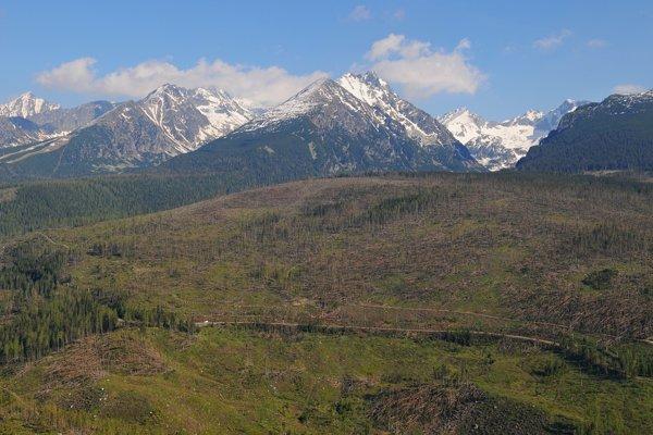 Tatranské holiny čaká zalesňovanie.