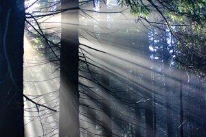 Prechádzky lesom.