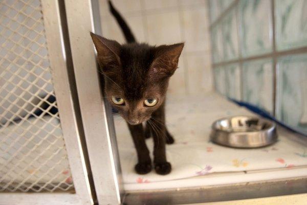 Mnohé mačky, ktoré kedysi obývali sľuďmi ich rodinný krb, končia na ulici alebo vútulkoch.