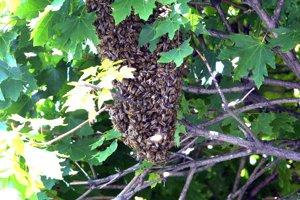 V roku 2004 včielky takto