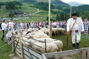 Bača Ladislav Kazár pri svojich ovciach.