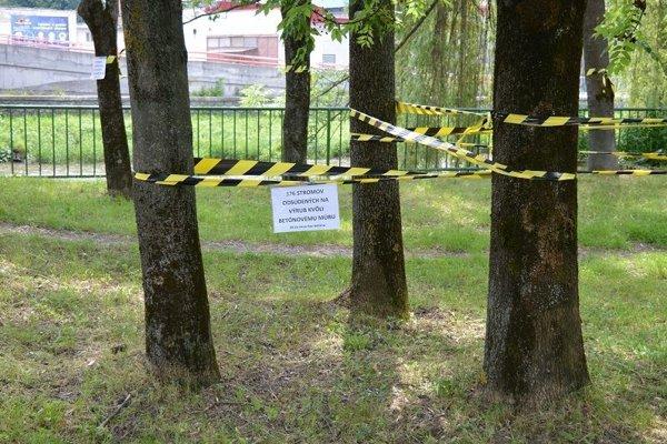 Tieto stromy by podľa mesta zmiznúť nemali.