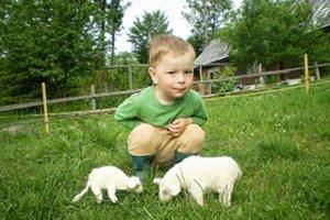 Ovečky na hranie vyrobila svojmu najmladšiemu synovi Matejovi mama.