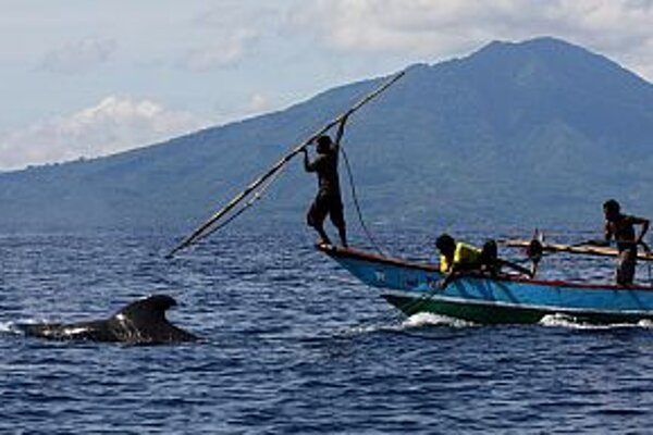 Technika lovu veľrýb sa počas storočí nezmenila.