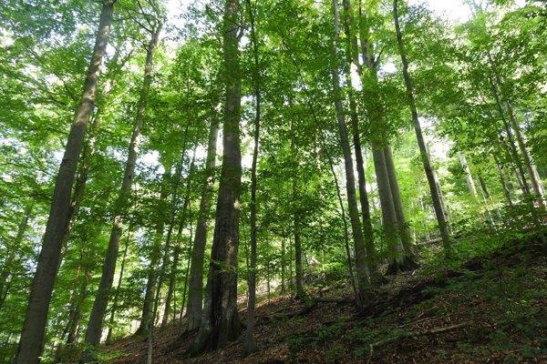 Národná prírodná rezervácia Rožok.
