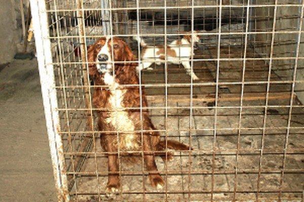 Odchytené psy čakajú v karanténnej stanici na majiteľa, alebo odvoz do útulku.