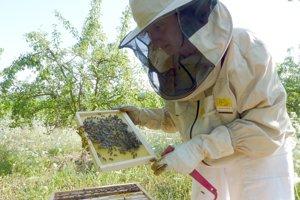 Gabriela Michniková Bernard sa k včelám vrátila vo Francúzsku.