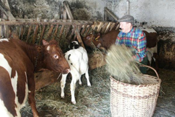 V lete na paši, v zime v maštali. Gazda sa o svoj dobytok vzorne staral.