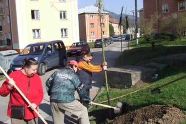 Do obnovy zelene na istebnianskom sídlisku chce obec investovať viac ako dvetisíc eur.