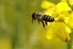 Ak ide o včelí úľ, tak sú na pomoc privolaní včelári, ktorí vedia včely odchytiť, prípadne presunúť celý úľ na iné miesto.