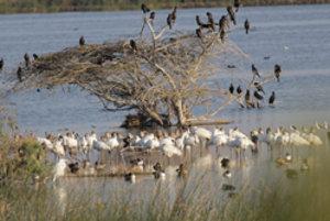 Záľubou aj prácou Dušana Karasku sú vtáci. Pozorovať ich sa vybral až do Indie.