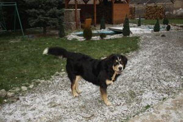 Majitelia psov žijúci v rodinných domoch psie koše využívať nepotrebujú. Tie sú najmä pre psy z panelákov.