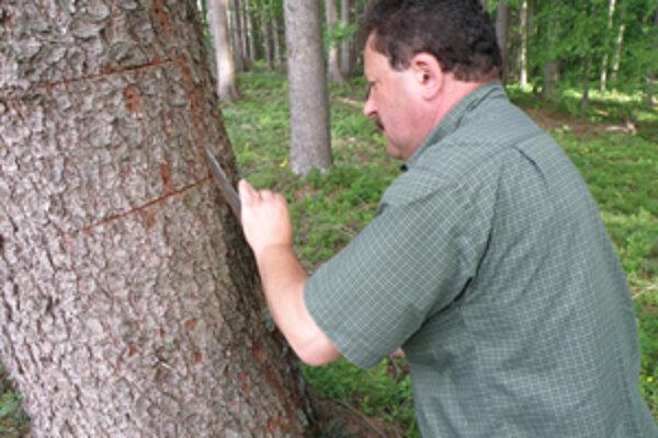 Jozef Herud pri odbere vzoriek kôry poškodeného stromu.