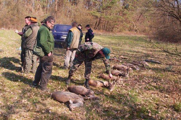 Pre poľovníkov a prírodu je takýto hromadný úhyn tragédiou.