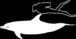 Porovnanie veľkosti dospelého človeka a delfína skákavého.