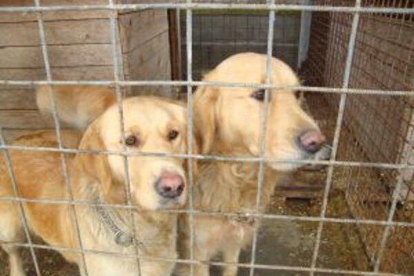 Ľuďom prekáža aj štekot psov v susedných domoch.