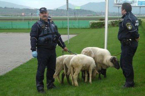 Zablúdené ovce odchytila až hliadka mestskej polície.
