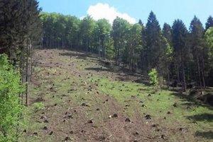 V Necpalskej doline podľa domácich ťažba dreva presiahla únosnú mieru.