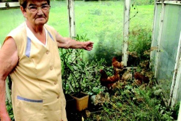 Spustošená záhradka. Počas minuloročných povodní si obyvateľka Rakova všimla, že sliepky mali čierne perie, akoby od oleja.