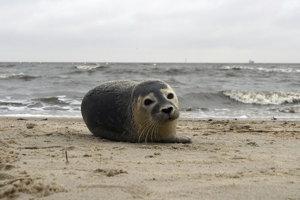 Tulenie mláďa.