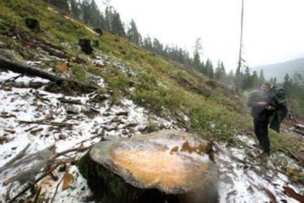 Smrekovica mala byť vyhlásená za prales, zatiaľ tam pilujú stromy.