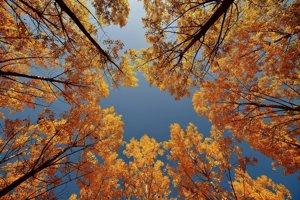 Jeseňou sfarbené listy na stromoch v lese pri maďarskom Níreďháze