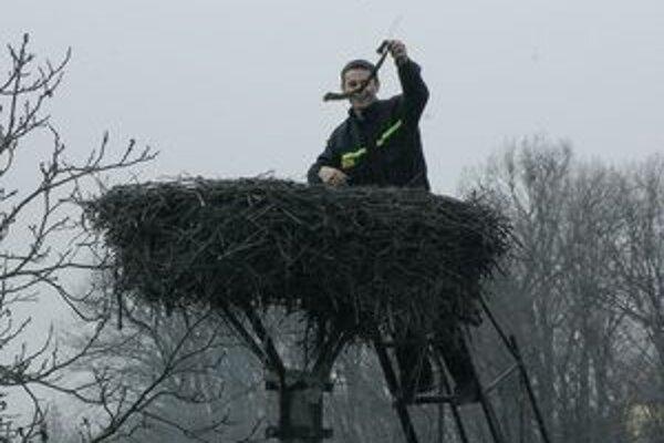 Takto sa realizovalo jarné upratovanie v hniezde bocianov.