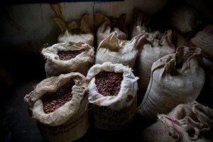 Ľudstvo pozná kakao a nápoje z neho oveľa dlhšie, ako sa predpokladalo.